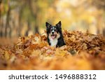 Dog In The Yellow Leaves In...
