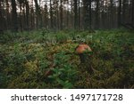 Mushroom On A Forest Background