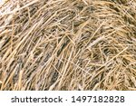 Bales Of Straw Are Illuminated...