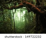 tropical rain forest | Shutterstock . vector #149722232