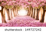 the romantic tunnel of pink... | Shutterstock . vector #149727242