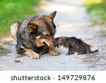 Stock photo little kitten pressed against the big dog 149729876