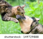 Stock photo dog playing with cat 149729888