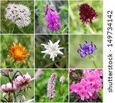 Small photo of Alpine flora collage (from top left: Valeriana montana, Alpine Sweetvetch, Black Vanilla Orchid, Golden Hawksbeard, Edelweiss, round-headed rampion, Turk's cap lily, common bistort, Alpenrose)