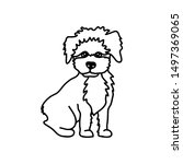 Maltipoo Dog Breed Vector...