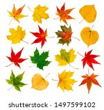 Autumn Leafs Collage With...