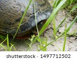 a small turtle in the grass hiding in its shell