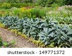 Traditional Vegetable Garden...