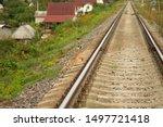 Stock photo hare crosses the railway bunny hare crosses the road wild hare on the railway 1497721418