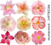 set of pink flowers isolated on ... | Shutterstock . vector #149785286