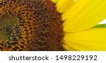 Yellow Sunflower Flower With A...