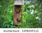 Do It Yourself Bat House With...
