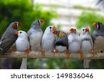 group of zebra finches perched...   Shutterstock . vector #149836046