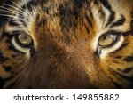 Dramatic Close Up Photo Of A...