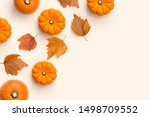 autumn fall and harvest... | Shutterstock . vector #1498709552