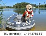 Golden Retriever The Lifeguard...