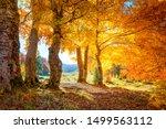 Golden Autumn In A Forest  ...