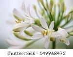 white flower   Shutterstock . vector #149968472