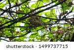 Bird\'s Nest On Metal String...