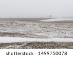 Fields With First Snow In Fogy...