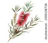 Callistemon Watercolor Flower...