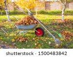 Raking Fall Leaves In Garden....