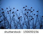 A Murder Of Crows Infiltrate A...