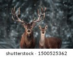 Noble deer male and female in...
