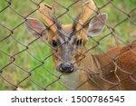 Aug 2017  Kapilas Zoo  Odisha ...