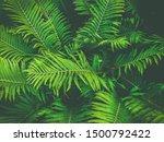 ferns leaves green foliage...   Shutterstock . vector #1500792422