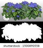 African Violets Flowers...