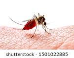 Dangerous Dengue Infected...