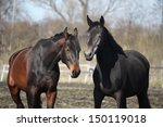 two adorable horses nuzzling...   Shutterstock . vector #150119018