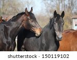 two adorable horses nuzzling... | Shutterstock . vector #150119102