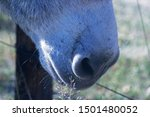 Close View Of Muzzle And...