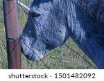 Head Of A Grey Donkey Behind A...