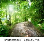 dawn on the road in the forest... | Shutterstock . vector #150150746