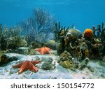 Seabed With Coral And Starfish...