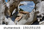 Porthole Driftwood View At...