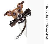 Stock photo dog with leather leash waiting to go walk 150158288