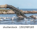 Small photo of Sludge Pollution Pouring into the Baltic Sea and Seagulls