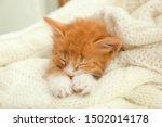 Stock photo cute little red kitten sleeping on white knitted blanket 1502014178