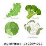 Cabbage Set. Vector...