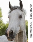 Fearful Glance Horse.