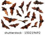 flock of flying fox fruit bats... | Shutterstock . vector #150219692