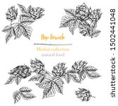 set of botany hand drawn sketch ... | Shutterstock .eps vector #1502441048