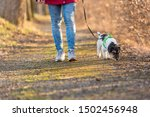 Stock photo woman is walking with a small obedient jack russell terrier dog in the autumn forest 1502456948