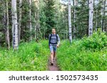Aspen Forest Trees And...