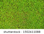 Green Grass Texture With The...
