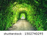 Magical Green Trees Lined Path